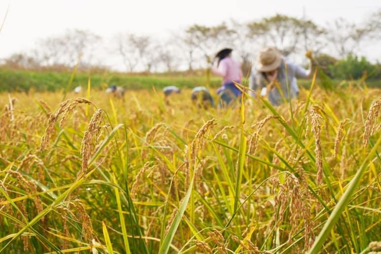 '자연재배 조동지쌀' 이야기