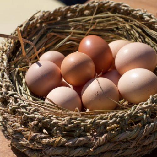[마르쉐@ 달걀 이야기1] 지역안에서 순환하는 농업
