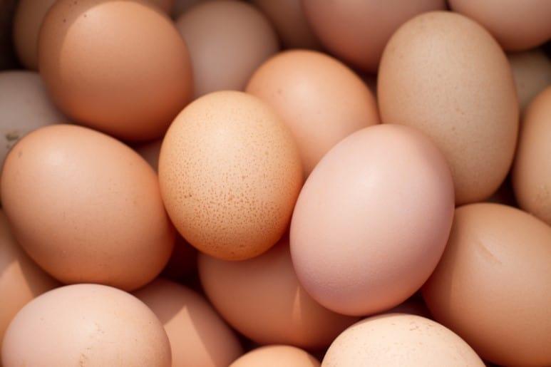[마르쉐@ 달걀 이야기2] 닭에게 이로우면 사람에게도 이롭다