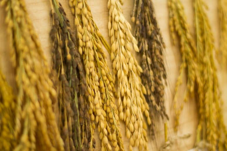 마르쉐@ 한반도 16도 토종쌀 막걸리 빚기 대회